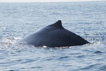 190222_Whale watching_PN Marino Ballena_Uvita_DSC01435