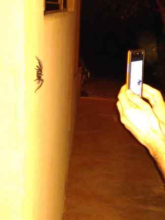 Frank making a photo of the Tarantula with his phone