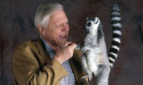 david-attenborough-www1410319776934240756.jpg