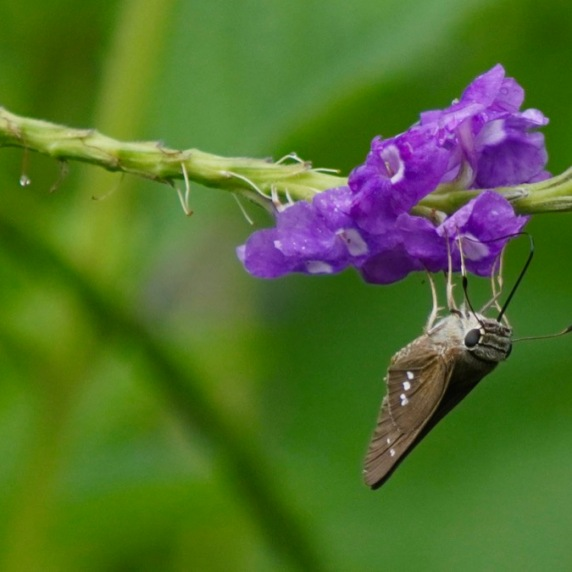 Sip it, butterfly