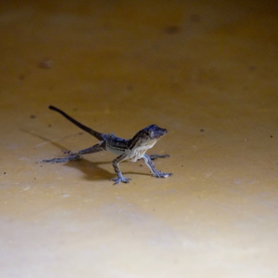 Lizard chainging skin